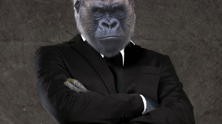 Marketinggorilla